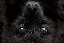 """Schwarz / :D :D :D """"A matematikus az egy vak ember, aki egy sötét szobában keres egy FEKETE macskát, ami nincs is ott."""" (Charles Darwin) :D :D :D"""
