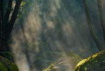 Vackra fotografier: Skogen