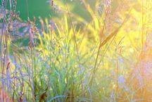 Vackra fotografier: ängen