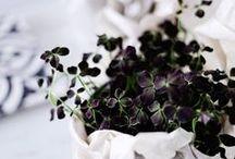 Växter arrangemang