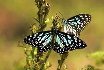Butterflies & Winged Things