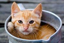 Cats - chats - Katzen - gatti - meow !