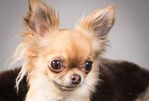 Luxury dogs!