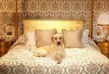 Luxury Pet Hotels