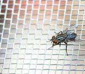 RADY - jak na hmyz
