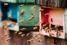 Imkern Bienen Bees