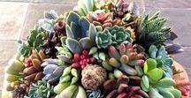 Interesting Garden Pots & Succulents / Succulents, Cactus, Potted Plants, Drought Tolerant