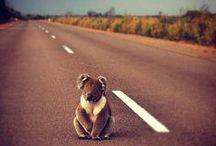 LOVE AUSTRALIA!!!