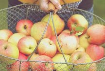 Apple Picking Season / Recipes, crafts, tips, and more for September family fun!