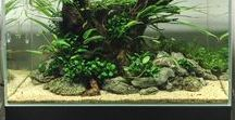 Interesting Aquariums / Aquariums, Built-in Aquariums, Public Aquariums, Under-Sea Habitat, Fresh Water Aquarium, Salt Water Aquarium