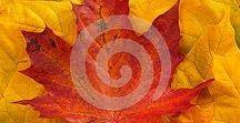 Autumn colors / Autumn leaves backgrounds