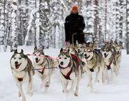 Finnisch Lappland / Hier findet ihr Inspiration und Reisetipps für Finnisch Lappland.