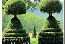Árboles y plantas grandes