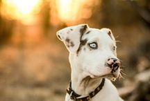Pups / by Briana Verhoeks