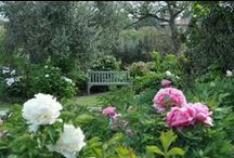 Peony garden / The largest collection in the world