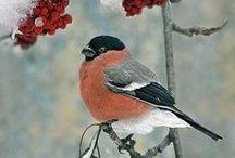 Příroda - ptáci