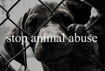 Los Animales Son la Ley >:v / Los animales... Merecen respeto :3