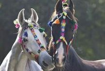 """029. Of Horses......... / """" of horses know Me to be Uccaihsrava"""" Bhagavad Gita 10.27"""" (who is white)"""