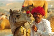 086. Camels and analogies / Analogies help one understand difficult concepts.