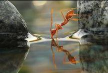 "035. The taste of Water / ""O son of Kunti, I am the taste of water"" Bhagavad  Gita 7.8"