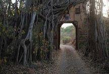 "039. Of all trees ........ / ""Of all trees I am the Banyan tree"" Bhagavad Gita 10.26"