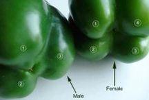 117. Fruit and Vegetables / Including salad ingredients, sea vegetables & algae, as well as unusual vegetables