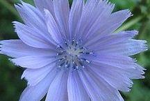 106. HEALING Bach Flower remedies & other flower remedies