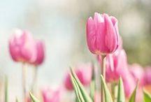 050. Of seasons, I am flower bearing Spring / Bhagavad Gita 10.35