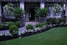 Piha / Gardening ideas etc