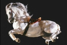 030. Dharma of Horses / The purpose for the horse was mainly to be trained for battle. All the high school movements developed the horses strength to aid the rider when attacking the enemy.