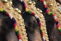 032. Dharma of elephants