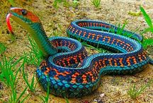 Amphibiens, reptiles, mollusques, gastéropodes / by Gaëtane Marsot