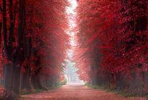 Autumn - Herfst / herfst ideeen voor buiten