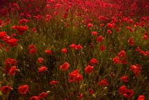 Beauty off nature - Natuur op zn mooist / Prachtige foto's van moedertje aarde...