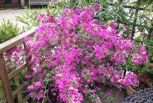 Planten in de tuin of pot - in potters or garden