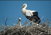 Birdwatching in Danube Delta / Danube Delta is a paradise for birdwatchers and nature lovers. This is the home of over 300 species of birds and countless animals. It's an Unesco World Heritage Natural Sight.