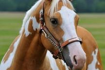 country / country, farm, horse