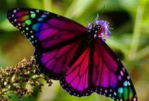 Butterflies, Dragonflies and Moths