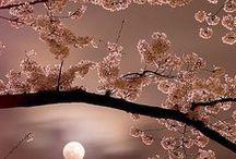 """"""" TEMPO DE LUAR"""" / Noites românticas, céu lindo, luar, amor, namoro, amar demais..."""