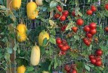 """""""LEGUMINOSAS, VEGETAIS E FRUTAS DO MUNDO"""" / Verduras, legumes e frutas deliciosas e exóticas......"""