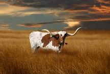 Texas / Spirit and Place / by Cathy Stewart Moore