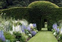 Garden / garden inspirations/ inspiracje ogrodowe