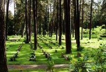 Favorite Cemeteries