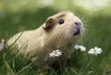 Cute _ animals