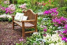 Garden  / by Kat Price