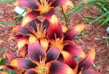 Flowers / by Tami Osborn