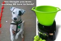 Funny Dog Memes / by GoDogGo Fetch Machine Automatic Ball Thrower for Dogs