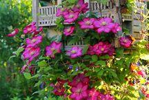 Garden Likes / by Peggy Corrente