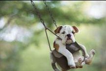 Adorable Animals / by Kacey Dillard