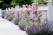 Gardens and More! / Landscape Architecture, Landscape Design, Garden Design, Plantings